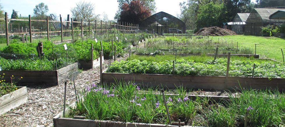 Native Plant Nursery Raised Beds