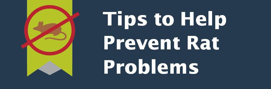 Tips to help prevent rat problems.