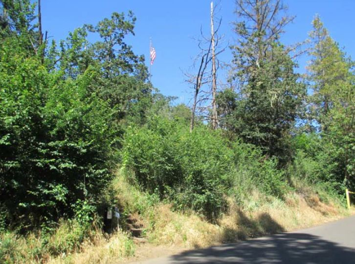 Skinner Butte habitat restoration before photo