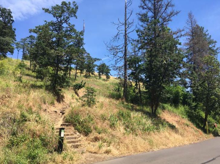 Skinner Butte habitat restoration after photo