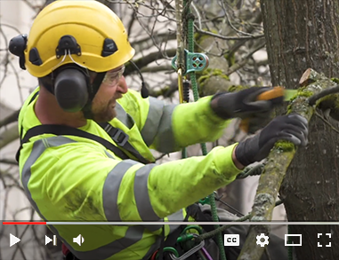 Video on Vimeo about City of Eugene's Urban Forestry team