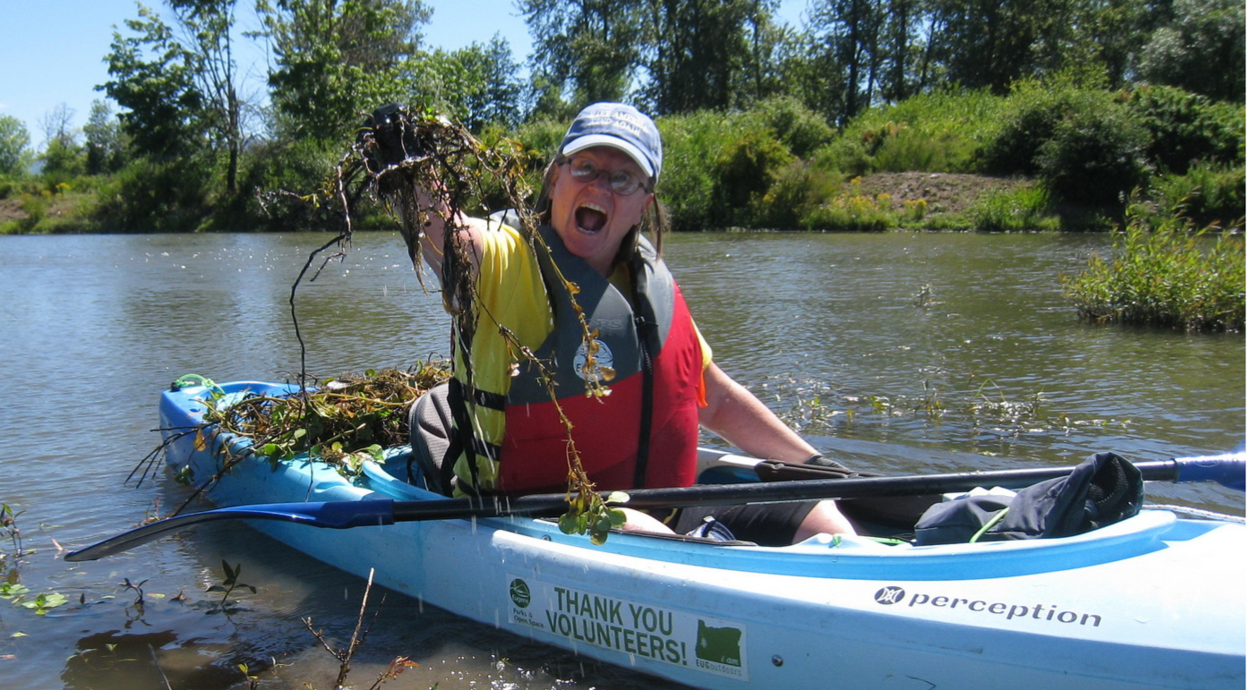 volunteer in kayak holding up an invasive plant