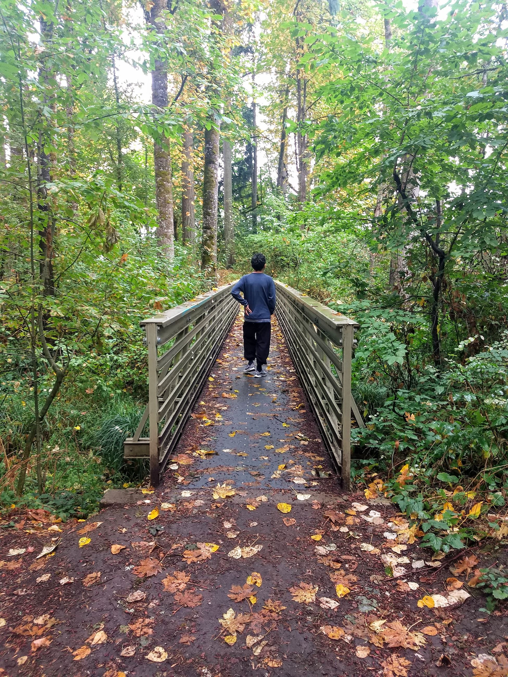 someone standing on a bridge in the forest
