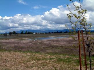 MeadowlarkPrairie-scenic