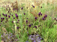 Flowers at Dragonfly Bend
