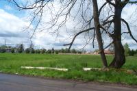 Grassy area at Lone Oak
