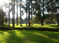 Natural area at Marche Chase Park