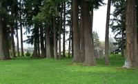 Tree area