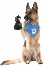dog with poop bag