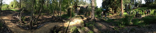 Laurelwood Bog